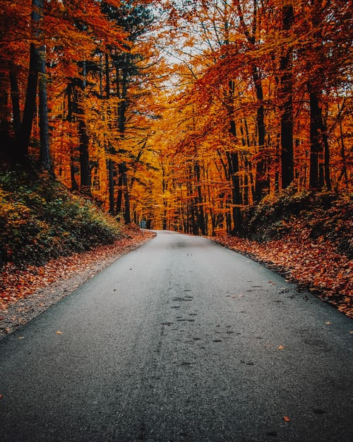 a road surrounded by loads of trees with orange leaves