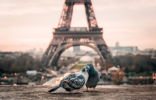 two pigeons in front of the Eiffel Tower