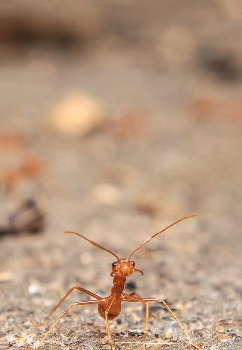 an ant on the ground