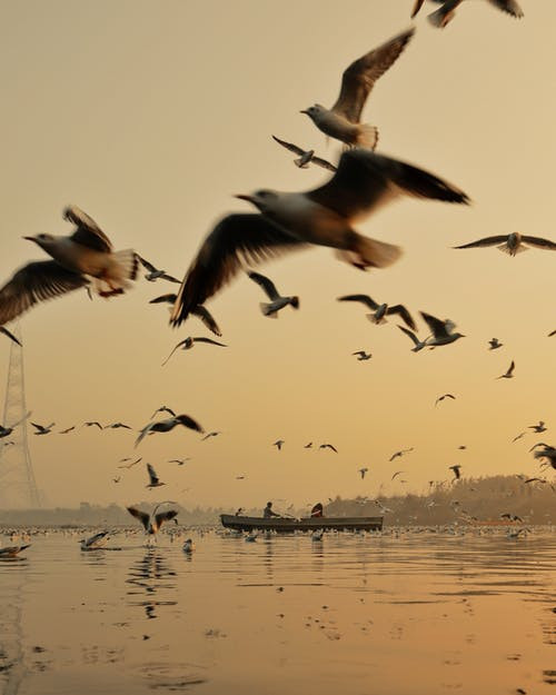 a load of birds flying over the sea