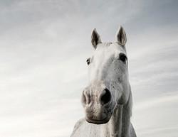 Horse Webpage 2 copy