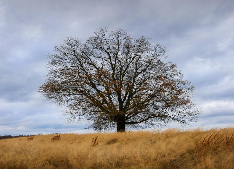 Tree on 85 Final