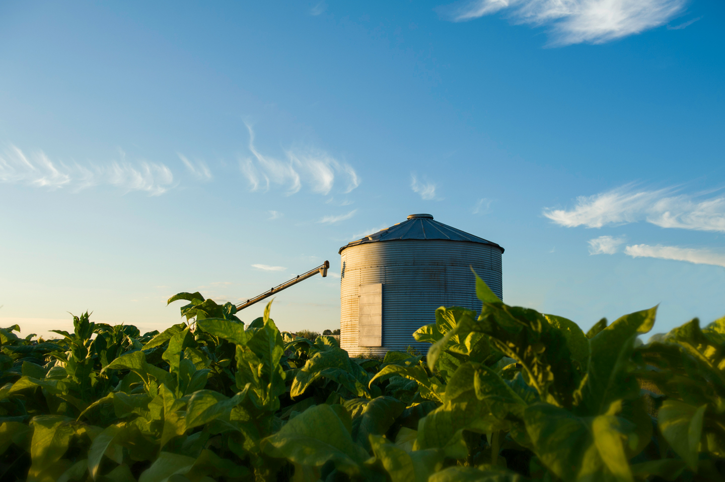 Tobacco and Silo