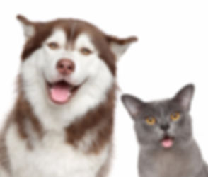 Happy Pets On White Background_edited.jpg