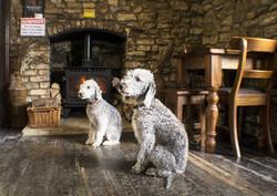 Dogs Fireplace