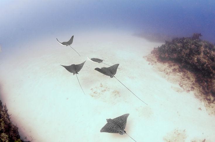 Aldora Divers North.jpg