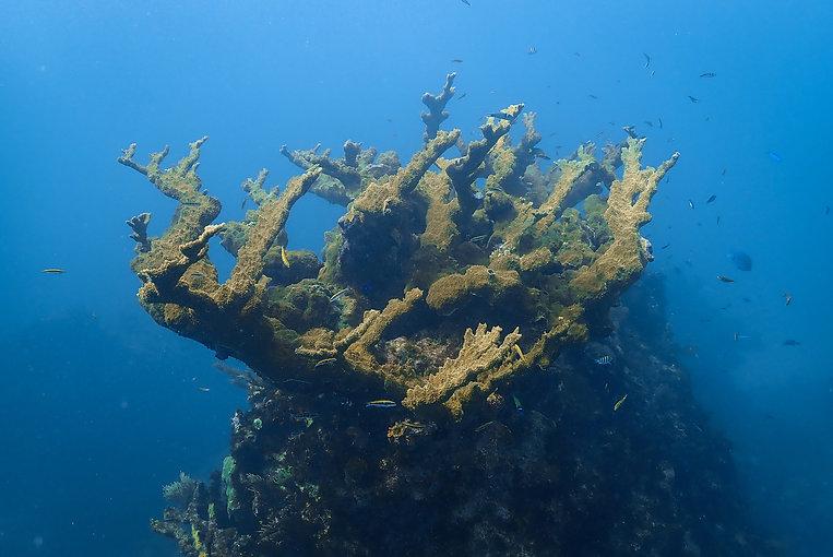 Aldora Divers Elk Horn.jpg