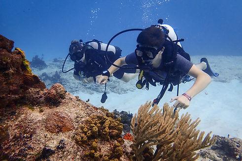 Aldora Open water image.jpg