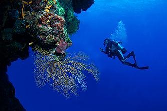Aldora Certified diving 01.jpg