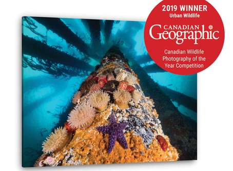 Canadian Geographic Winner