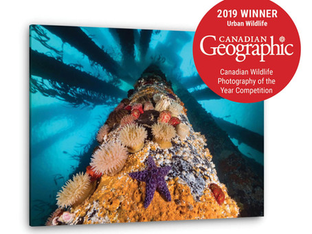 Canadian Geographic Winner