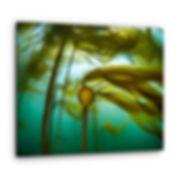 Kelp in the deep.jpg