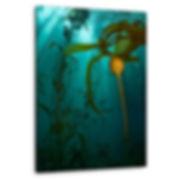 Kelp Dreams.jpg