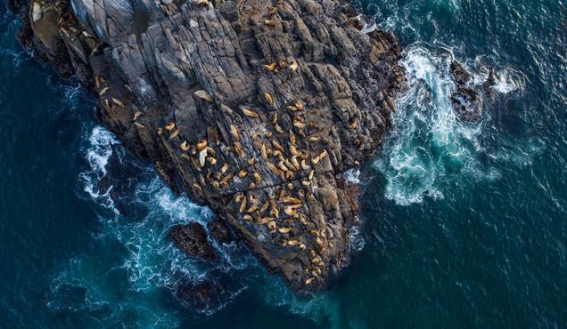 Sea Lion Rock