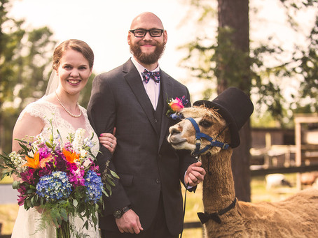 A Bride, a Groom, and Two Llamas, oh My!