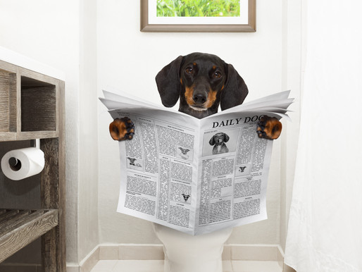 Has Your Dog Learned to Use the Toilet?