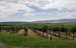 vineyard-1024x650