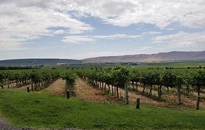vineyard-1024x650.jpg