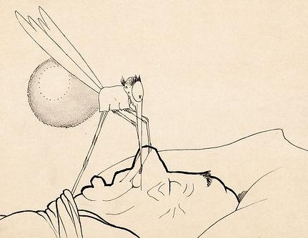 maccay-mosquito-1.jpeg