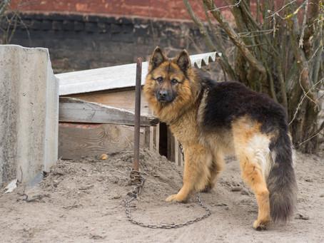 The Backyard Dog