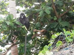 monkey ANGHTHONG