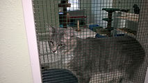 Cat Rescue & Adoption Hot Springs AR