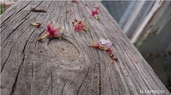 El Capriccio.La página ideal para crear tu hogar.Hecha a mano.Cuidando cada detalle. Todo lo que puedes imaginar para decorar. Trabajando con madera desde 1997.