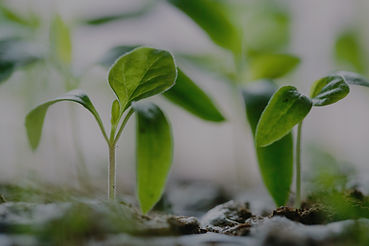 green%20plants%20on%20soil_edited.jpg