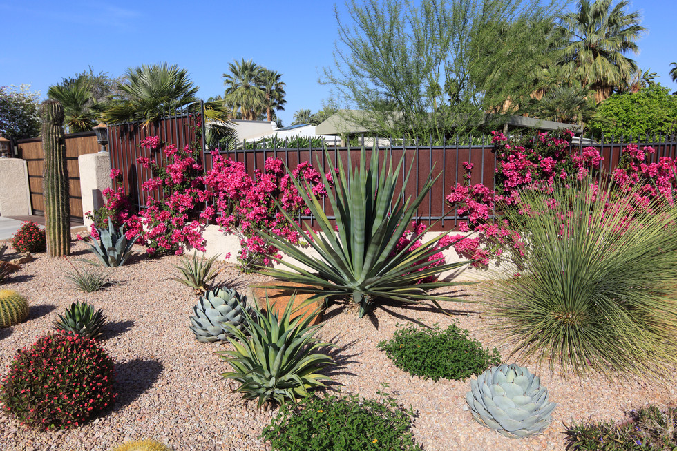 Native and Xeriscape Landscaping