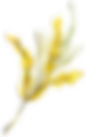yellow-wildflower-branch-2.png