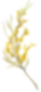 yellow-wildflower-branch-1.png