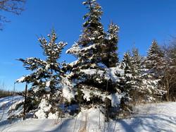 evergreen winter 3