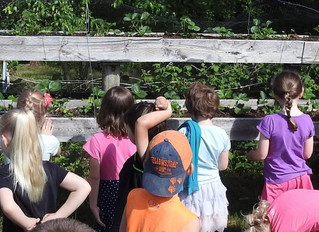World Environment Day – Teaching Our Children