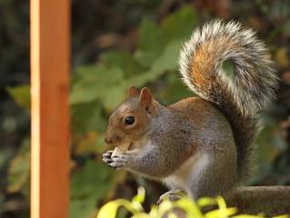 Squirrel Appreciation