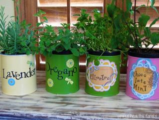 Top 5 Indoor Garden Ideas