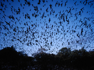 Nature Notes: Benefits of Bats