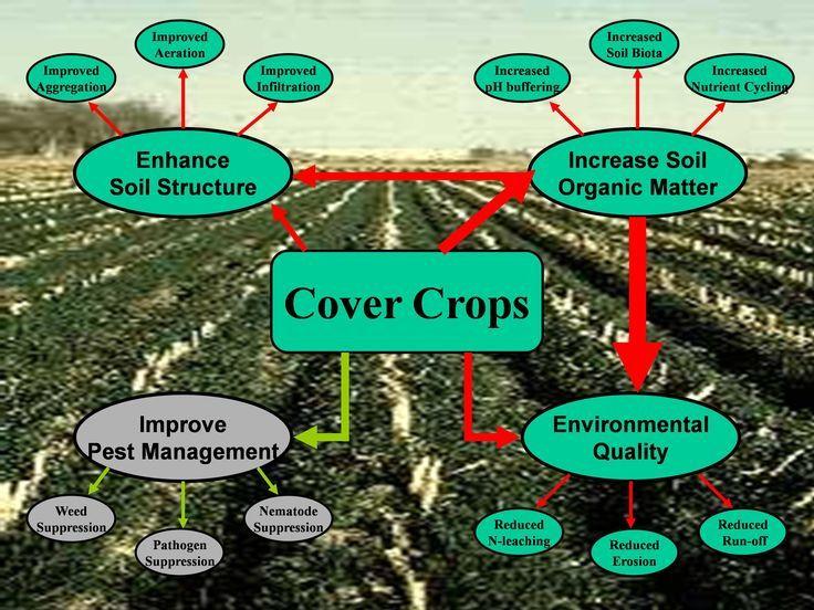 covercropsdiagram