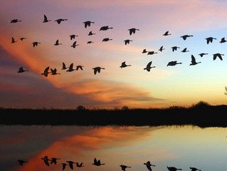Nature Notes: Feathers are Flying