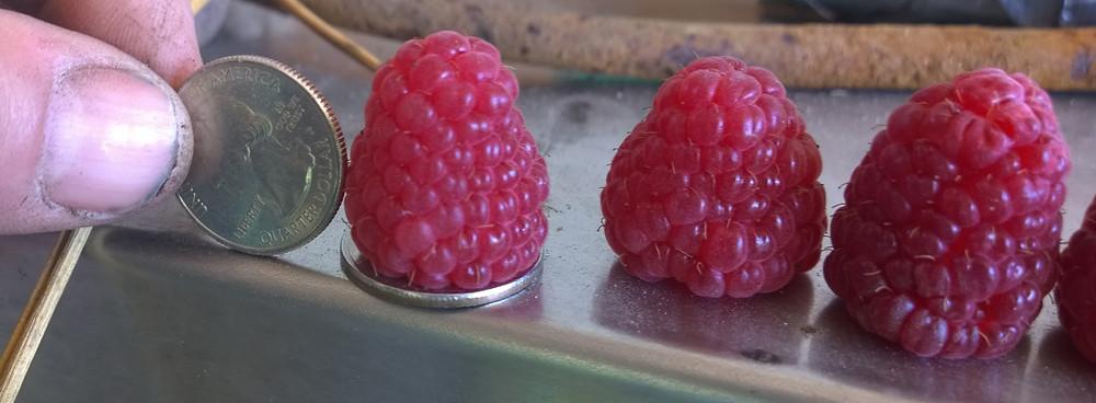 raspberryinsept
