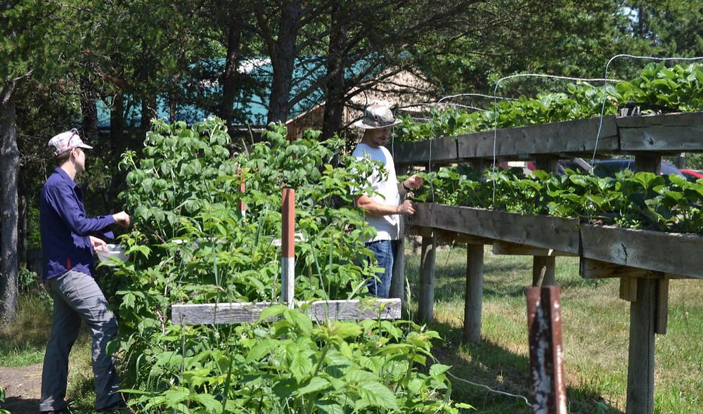 gardencrewlongsleeves