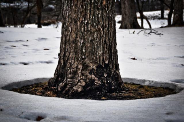 tree ring.jpg