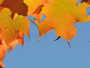 Nature Notes: Fall Foliage