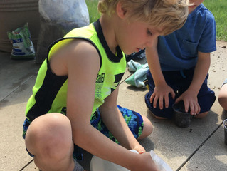 Home Grown Stewards – Family Activity Kits