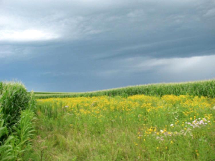 prairiestrip