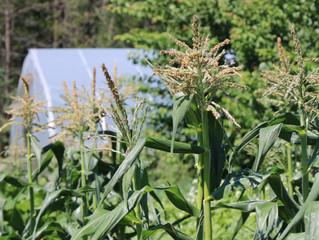 Conserving Water in Your Garden