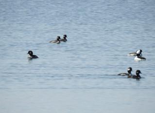 Spring Birding for Conservation