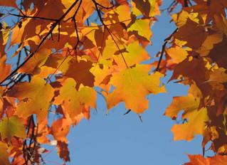 Minnesota Tree ID – Part 1