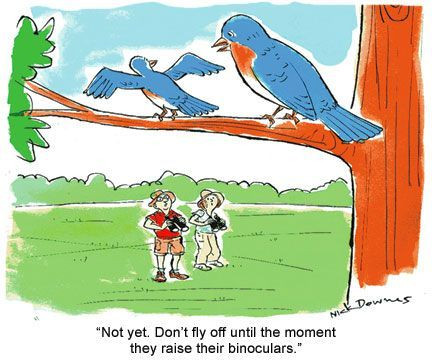 birding cartoon