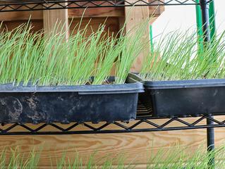 Get a Head Start on the Growing Season with Soil Blocks