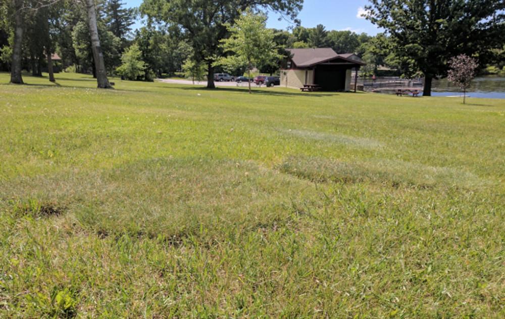 lumparkgrass